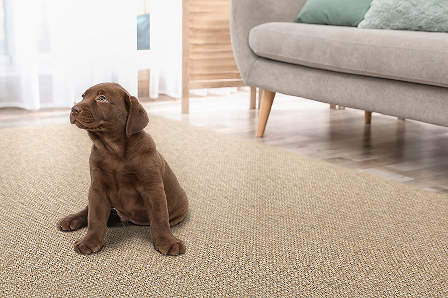 Puppy friendly: not only pets enjoy the softness of our SynSisal® Ravenna in mesquite; plus, this weave is super easy to clean.